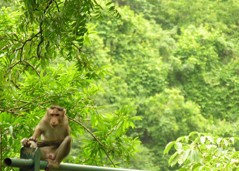 Monkey Me...